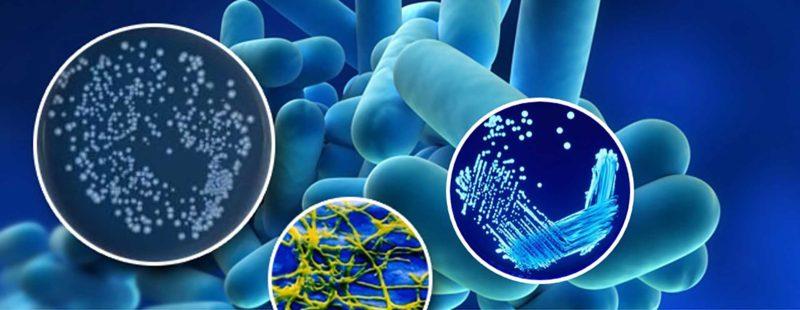 Η ASHRAE δημοσίευσε μια αναθεωρημένη έκδοση του προτύπου της που παρέχει μια πιο ολοκληρωμένη προσέγγιση για την πρόληψη της ανάπτυξης και της εξάπλωσης της Legionella.